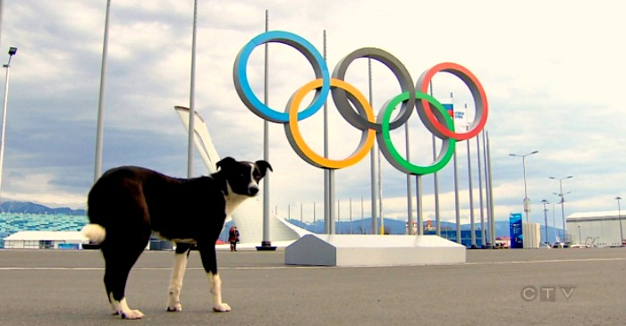 How to talk to your dogs and cats about the Sochi Olympics
